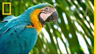 Why Are Wild Parrots Disappearing in Miami?   Short Film Showcase