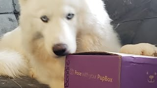 Live PupBox Unboxing With Monroe The Husky❣