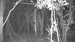 Video A leopard in the Issa Valley displays her softer side! (Oct2014 - UPP/MPI-EVA) download MP3, 3GP, MP4, WEBM, AVI, FLV November 2017
