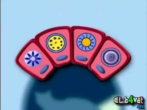 Toxoplasma gondii lifecycle