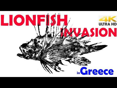 VENOMOUS LIONFISH Invasion In GREECE |Spearfishing Life 🇬🇷 [4K]✅