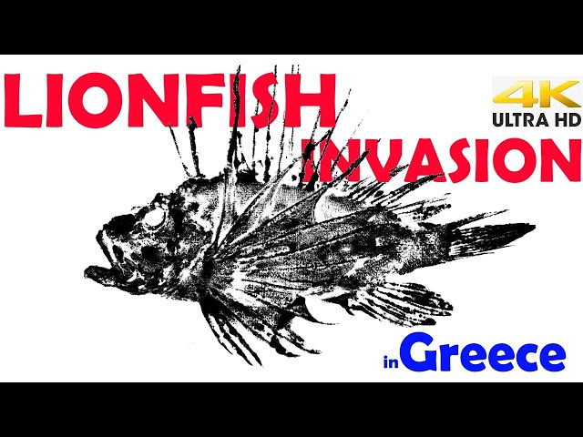 VENOMOUS LIONFISH Invasion in GREECE |Spearfishing Life 🇬🇷 [4K]✅