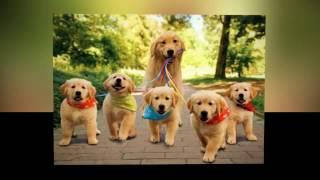 Человек собаке друг - это знают все вокруг !