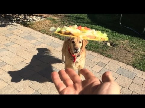 Fritz Learns To Catch Compilation #2