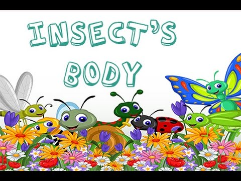 Dr Jean - Insect\u0027s Body - Sing and Learn about Bugs with Dr Jean