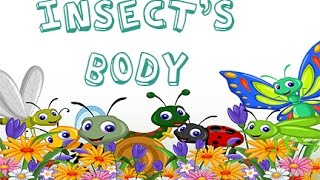 Dr. Jean - Insect's Body - Sing and Learn about Bugs with Dr. Jean