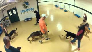 Maryland Dog Training  Obedience Heeling Circles