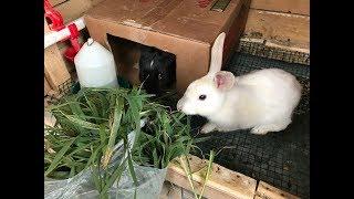 Evde Tavşan Bakımı Tavşanlar Neler Yer