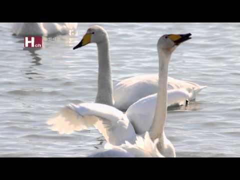 [TVZONE]Habitat for Migratory Birds at the Estuary of the Nakdong River