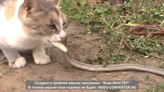 Коты на охоте, hunting cats