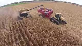 Harvest 2014 P1352AMX 230 Bu Ac TK Farms Darke Co Ohio , Claas Lexion 750 on tracks