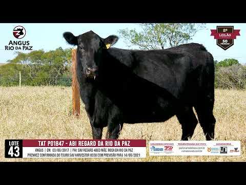 LOTE 43 PO1847 ABI REGARD DA RIO DA PAZ - Prod. Agência e TV El Campo