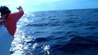 Nick Fighting Jumping Sailfish