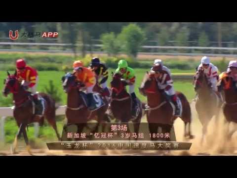 2016 China Racing Championships leg Shanxi: Horse Racing Full Record