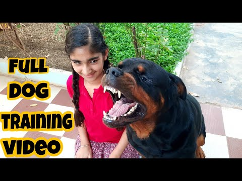 fully trained rottweiler|| rottweiler dog show all training commands