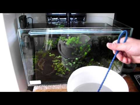 HOW TO: Introduce Tiger Shrimp into the tank