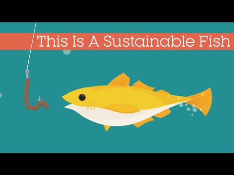 This Is A Sustainable Fish