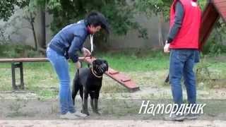 Дрессировка собак в Иваново. Воспитание щенков.