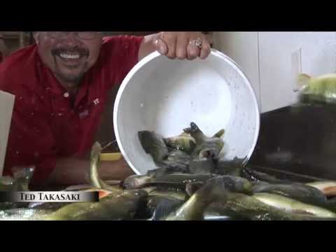 The skinzit on walleye crappie bluegill doovi for Panhandler fish filleter