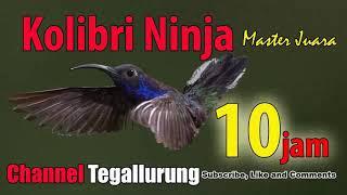 Gambar cover Audio Master 10 JAM ! Master Jernih Kolibri Ninja, Master Burung Konin Kicau Burung