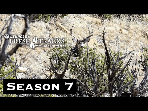 40 Yards From A Buck: Colorado Archery Mule Deer | (Amazon Episode)