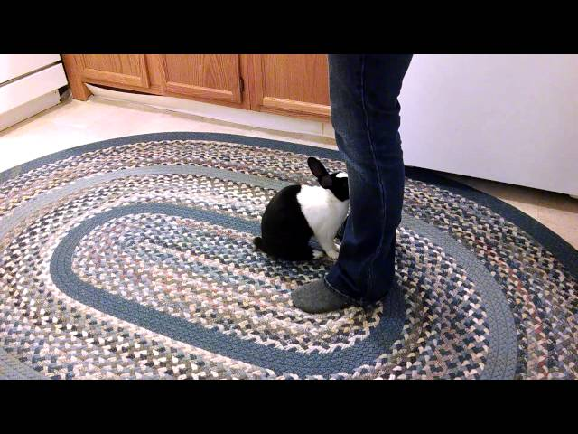 Rabbit tricks
