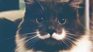 Знаменитые коты