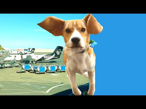 Beagle puppy Job Hunt at the Airport