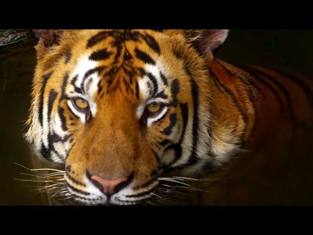 10 Incredible 4K (Ultra HD) Videos