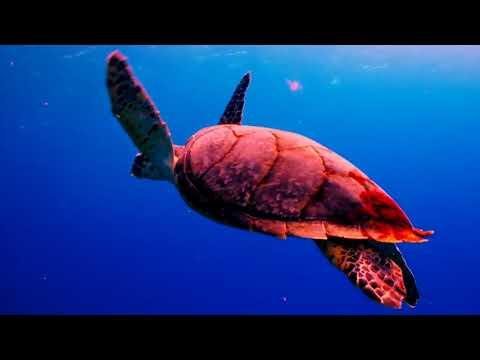 deniz altı rahatlatıcı video hd