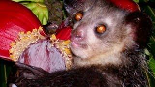 World's Most BIZARRE Looking Creatures