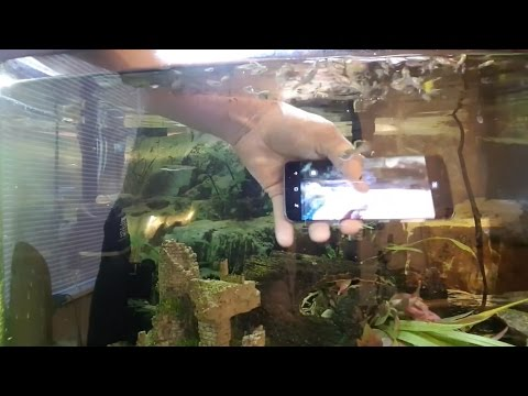 Samsung Galaxy S8 waterproof test   Phone Review   giffgaff