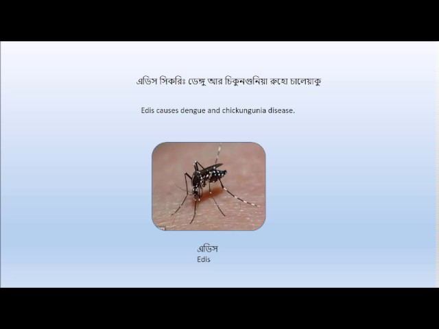 A Study of Mosquitoes and Flies