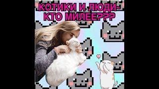 """БЫВАЮТ ТАКИЕ ИНТЕРЕСНЫЕ МЕСТА В МОСКВЕ ??? КАФЕ """" котики и люди """""""