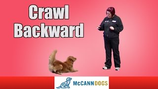Teach Your Dog To Crawl Backwards On Command