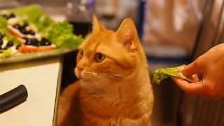 Кот ест листья салата.