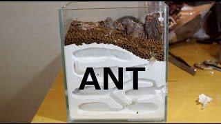 蟻の巣作り 後篇 [ ant farm ]