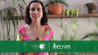 Alecrim: Saiba Tudo/Rosemary: Know Everyhting - A Menina do Dedo Verde