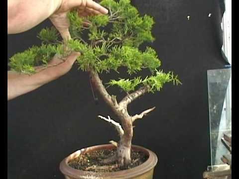 chinese juniper styling wmv youtube rh youtube com Bonsai Wire Sizes Copper Wire for Bonsai