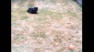 Милые короткие видео про животных