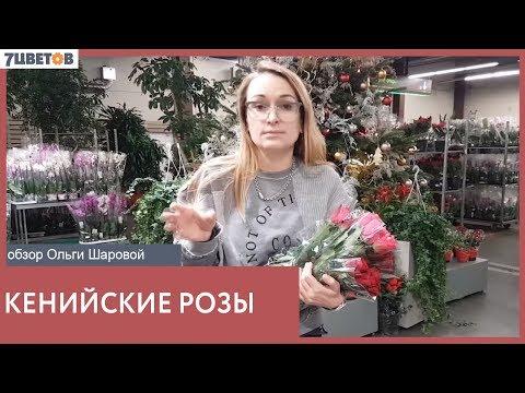 Розы Кении - обзор сортов