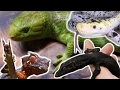 10 Strange Snakes & Lizards That You Didn't Know Existed! SnakeBytesTV