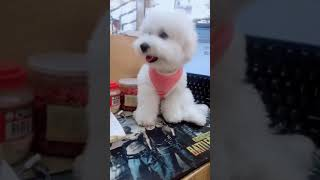 Look at these cute and funny puppies dogs 3192
