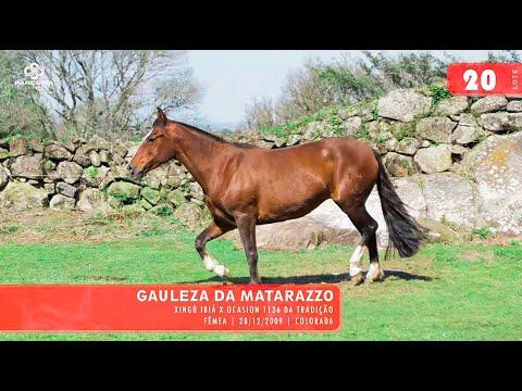 Lote 22 - Gauleza da Matarazzo