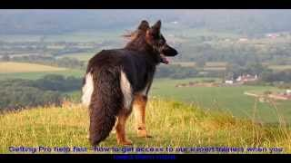Imported German Shepherds Guide