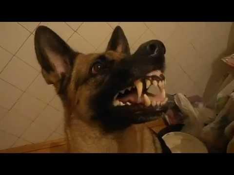 Signora fa la cacca nel supermercato doovi - Cacca nel bagno ...