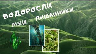 водоросли. Мхи (Мохообразные). Лишайники. Строение водорослей. Видеоурок. Биология 6 класс 7. ЕГЭ