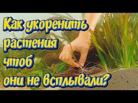 Как сажать растения в аквариуме чтобы не всплывали