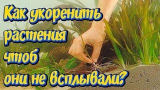 Посадка растений в аквариум! Как укоренить растения в аквариуме чтоб они не всплывали!!