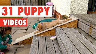 31 Funny Puppies | Funny Dog Video Compilation 2017